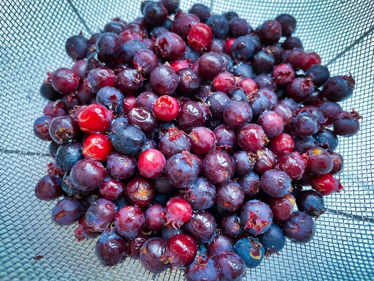 収穫したジューンベリー